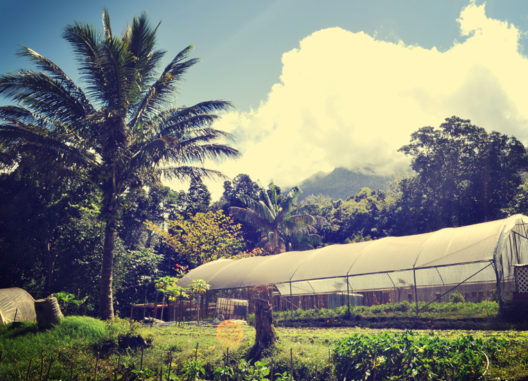 A Day With a Local Farmer