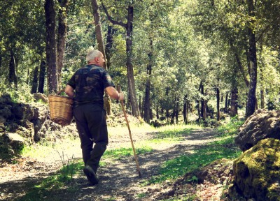 Trekking & Mushroom picking on Mt. Etna