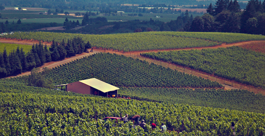 Picnic in Scenic Willamette Valley Wine Country