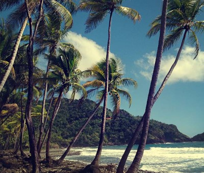 Palm trees swaying in the wind on the beach of the Caribbean island of Dominica